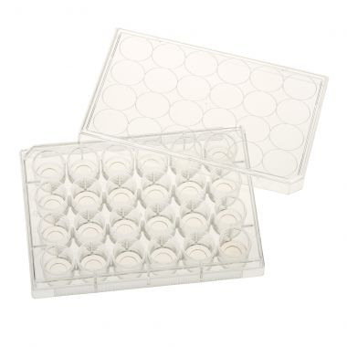 24 Well Glass Bottom Tissue Culture Plate, 10mm Glass, Sterile, 5/cs
